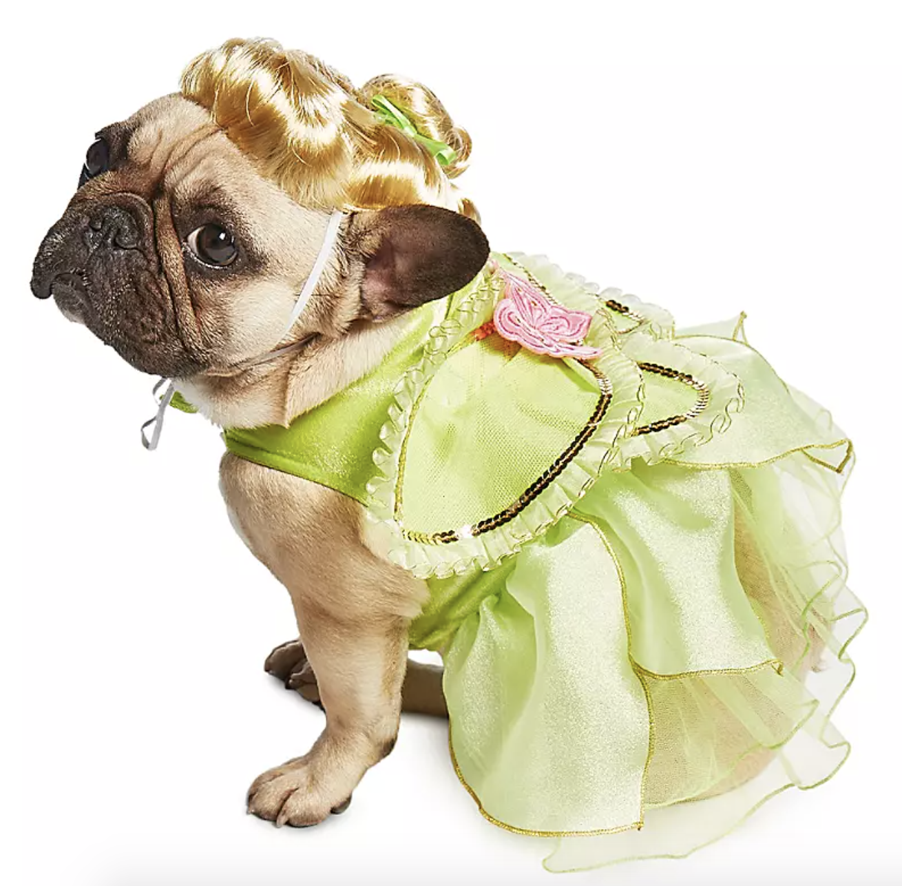 a pug in a green tinker bell dress with a blonde wig