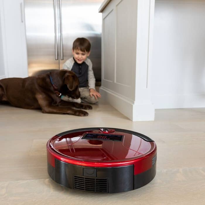 A red robotic vacuum cleaner on the floor sitting in front of a child and brown labrador