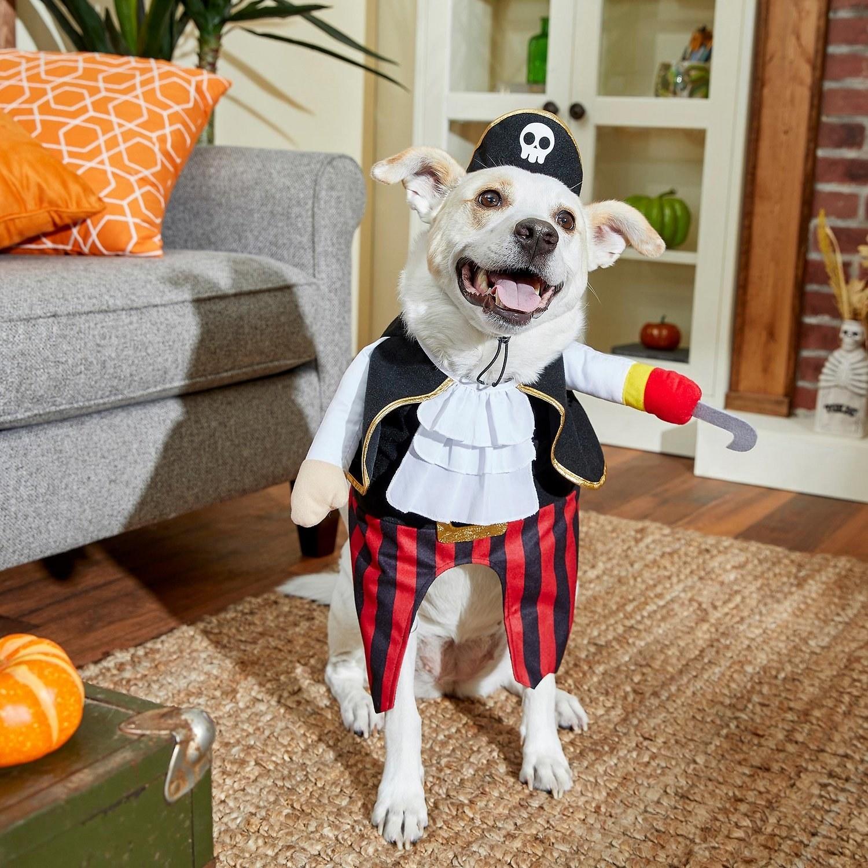 a dog wearing a pirate costume