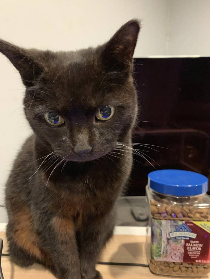 A black cat is posing on a desk next to a container of crunchy salmon treats