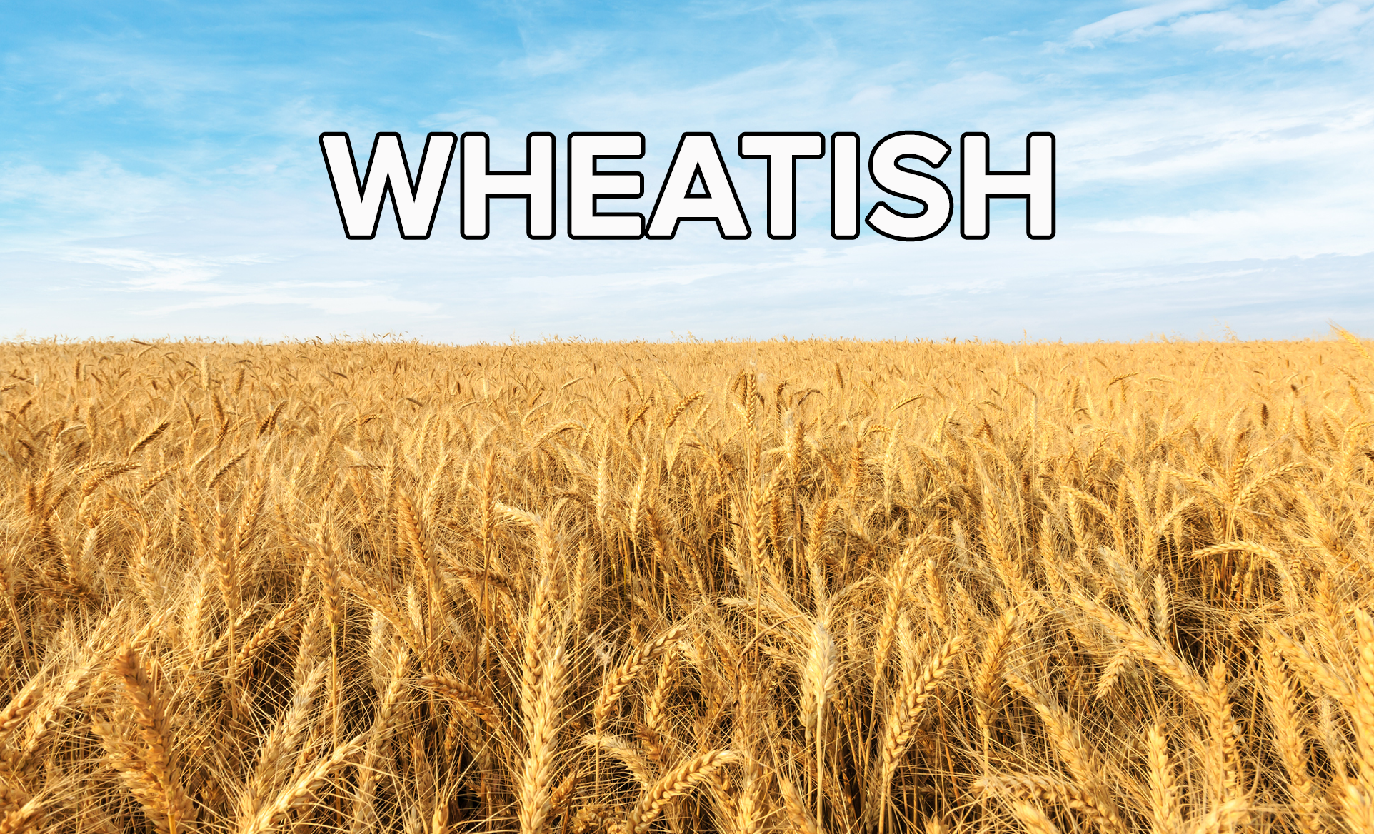 A wheat field on a sunny day