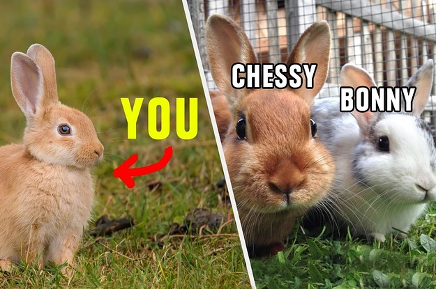 Have You Ever Asked Yourself Which One Of My Pet Rabbits You Are? No? Well, Heres This Quiz Anyway
