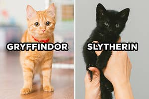"""On the left, a curious kitten standing on the floor labeled """"Gryffindor,"""" and on the right, someone holds up a kitten labeled """"Slytherin"""""""