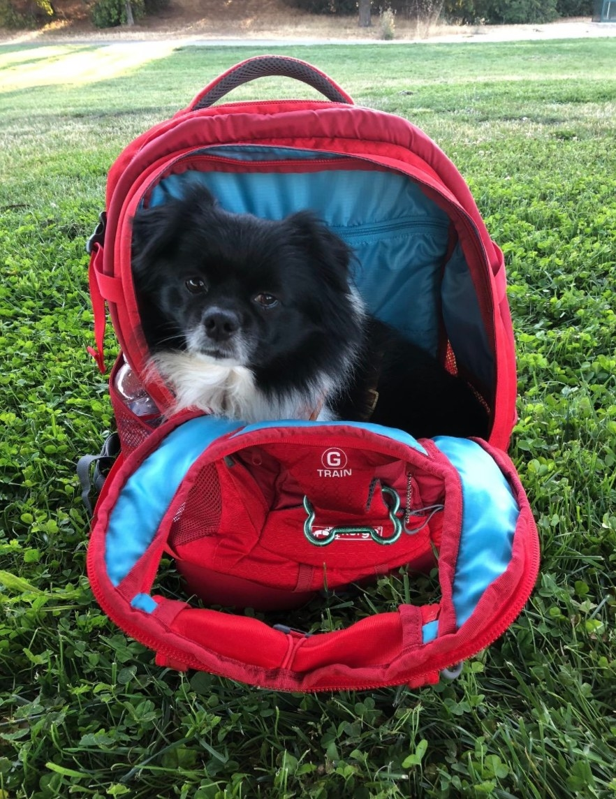 a reviewer's dog in red pet backpack