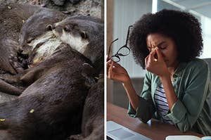 On the left, a group of sleeping otters, and on the right, someone rests their elbows on a desk with their glasses in one hand and pinches the bridge of their nose with the other hand