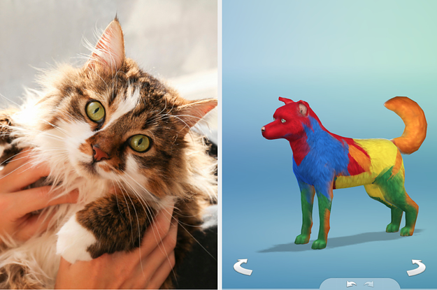 Design Your Own Pet And Well Tell You What Type Of Cat You Are