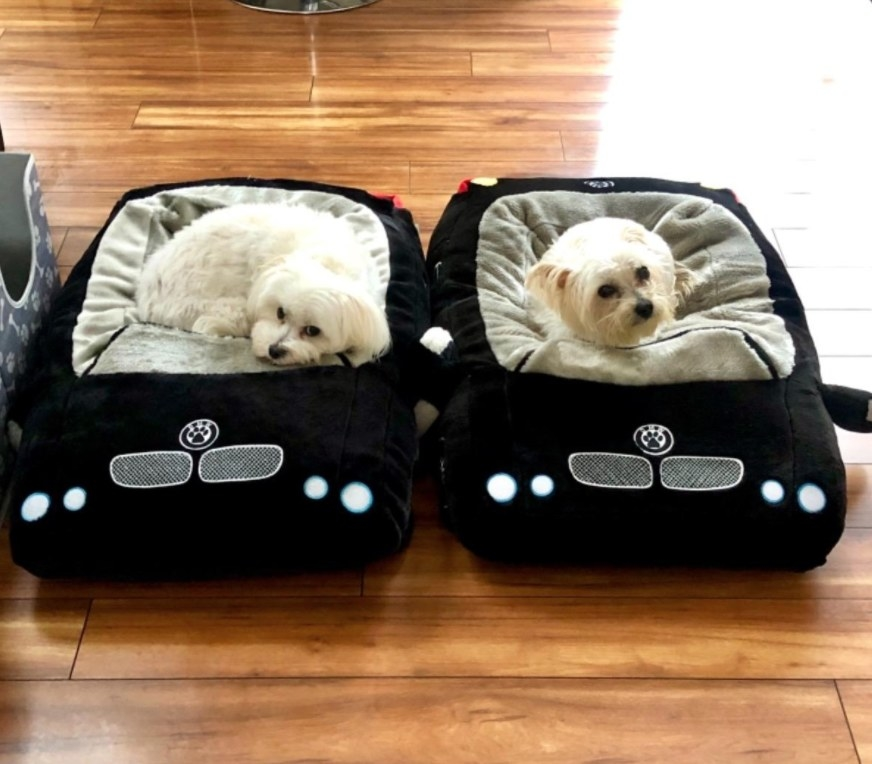 convertible dog beds