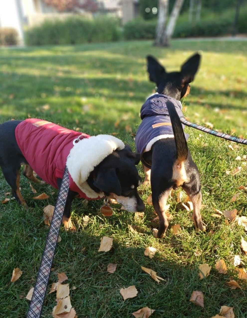 MEDIUM CANCER BANDANA small dog clothes small dog collars small dog toys toys for dogs medium dog clothes medium dog collars