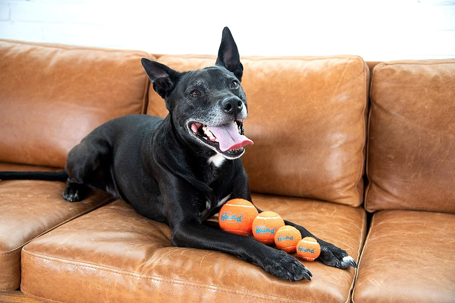 A dog on a couch with four different-sized tennis balls