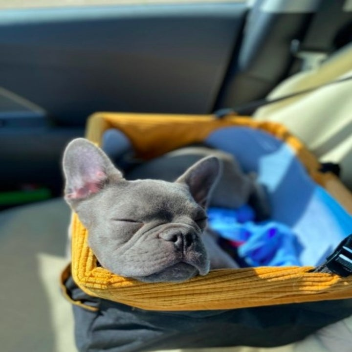 reviewer photo showing french bulldog sleeping in a dog car seat