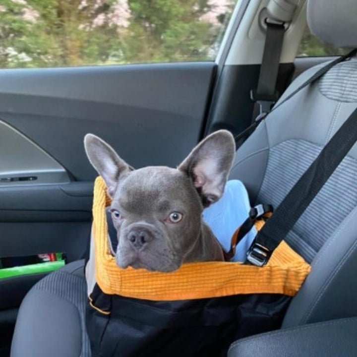 reviewer photo showing french bulldog sitting in car seat