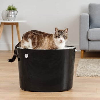Product photo showing a cat sitting on top of a litter box