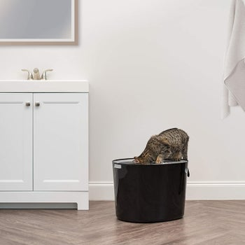 Product photo showing a cat putting their head into a top entry litter box