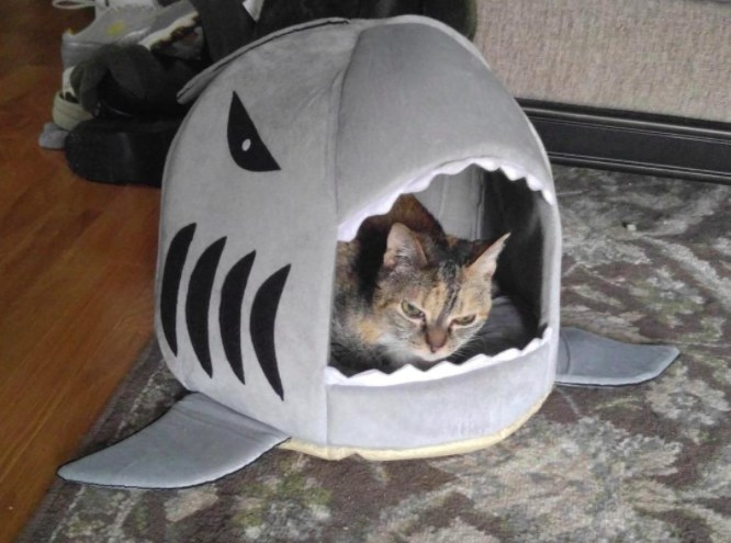 cat sitting in a shark shaped bed
