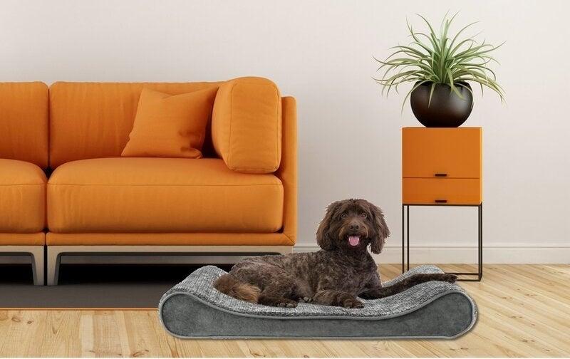 Brown dog sitting on gray mattress