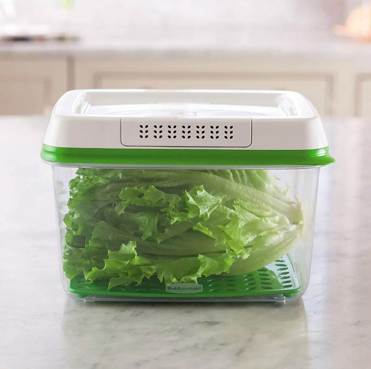 FreshWorks Food Storage Contianer