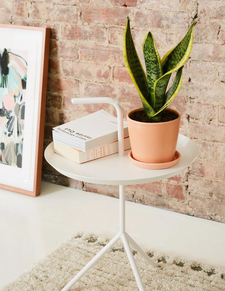 A snake plant in a coral colored pot on top of a white side table.