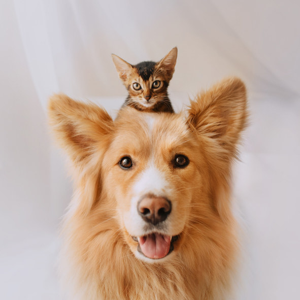 Photo of a happy, mixed breed dog with a kitten on his head.