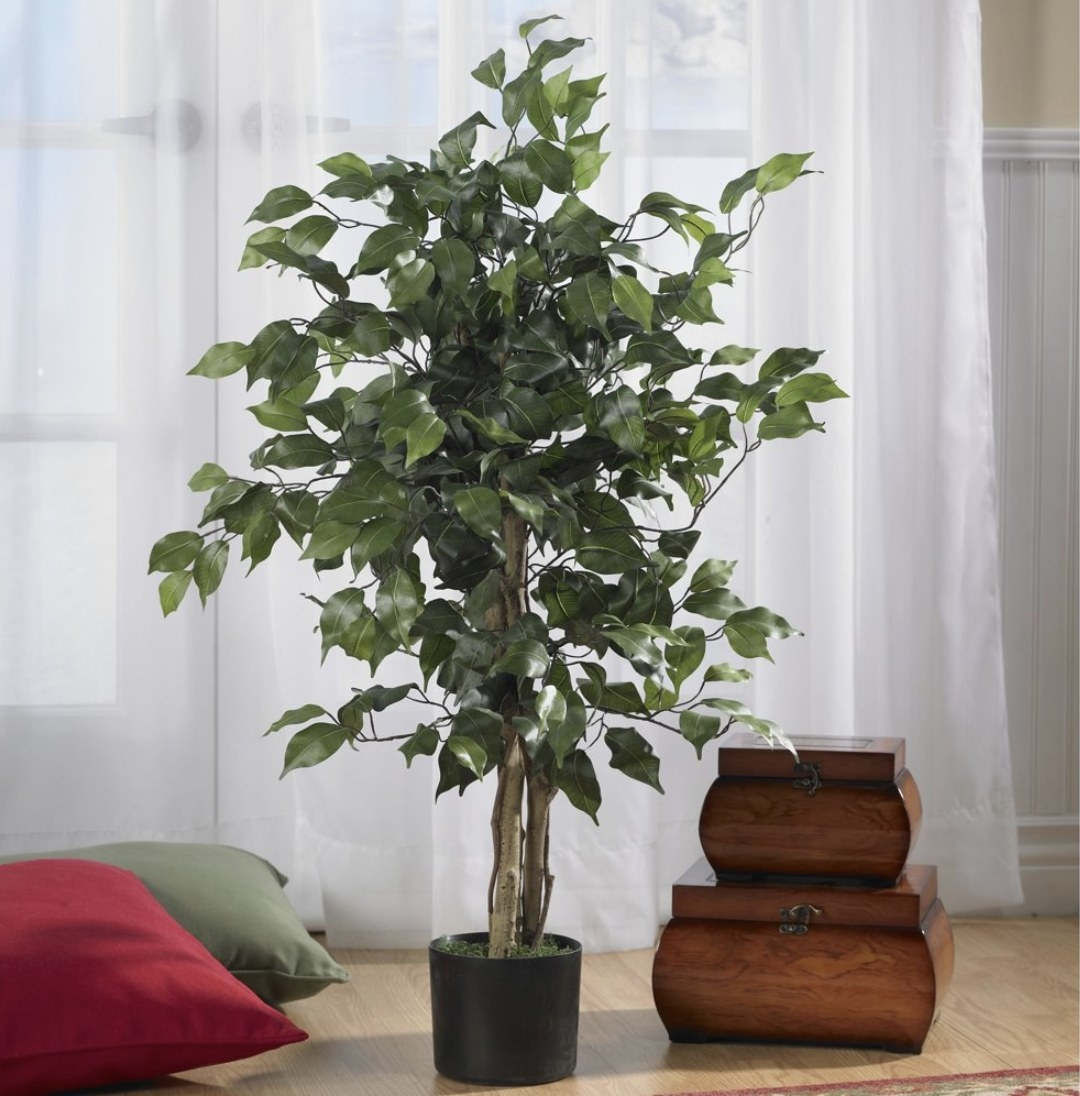 An artificial ficus tree in a living room