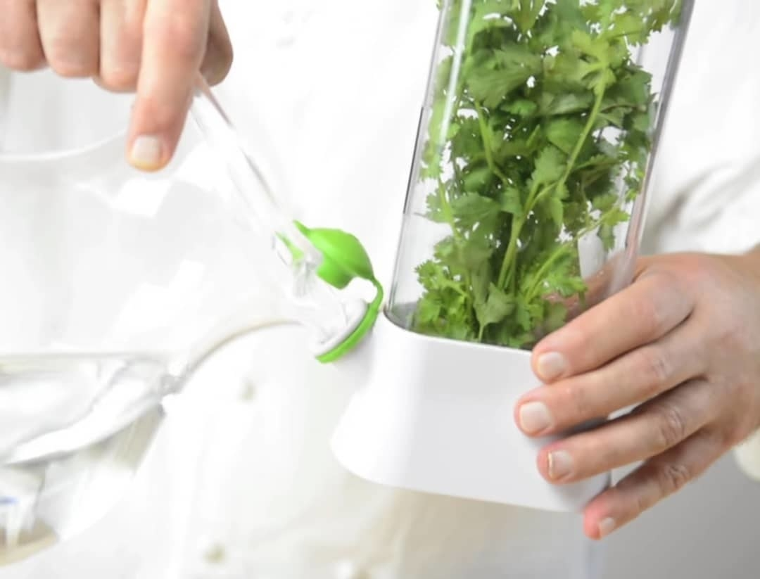 A person pours water into the herb keeper spout to keep the cilantro inside fresh