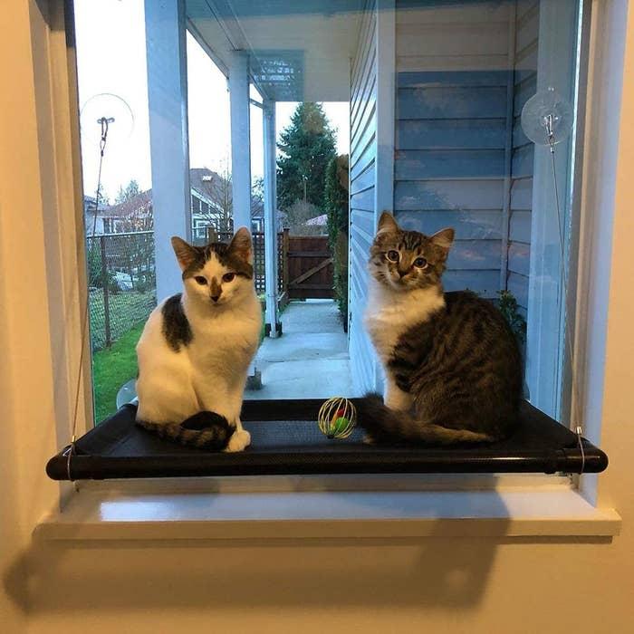 Two kittens on the cat hammock