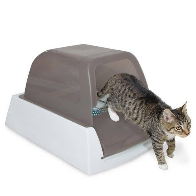 A cat walks out of the taupe ScoopFree Automatic Cat Litter Box