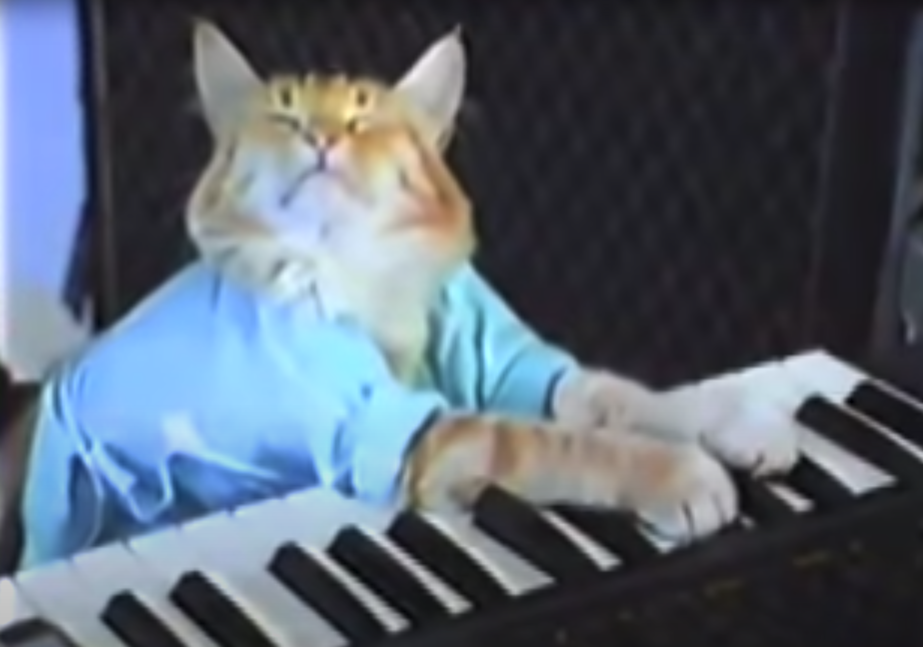 A cat in a t-shirt playing a piano