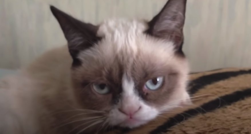 An incredibly grumpy looking cat with a huge scowl on her face