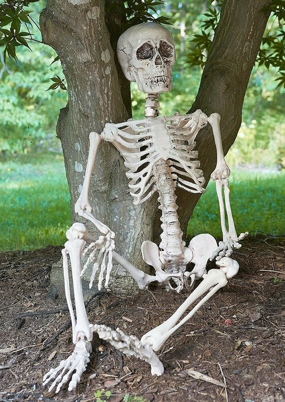 The skeleton in a sitting pose against a tree