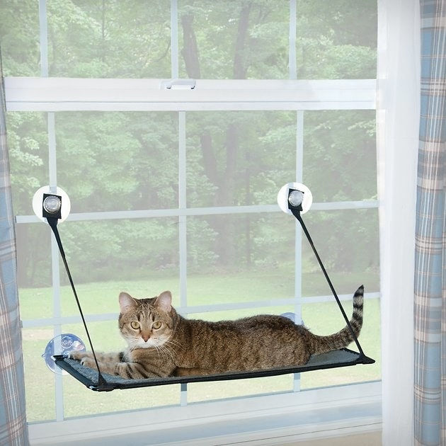 A cat lays on top of the K&H Pet Products EZ Mount Cat Window Perch that's mounted on a window