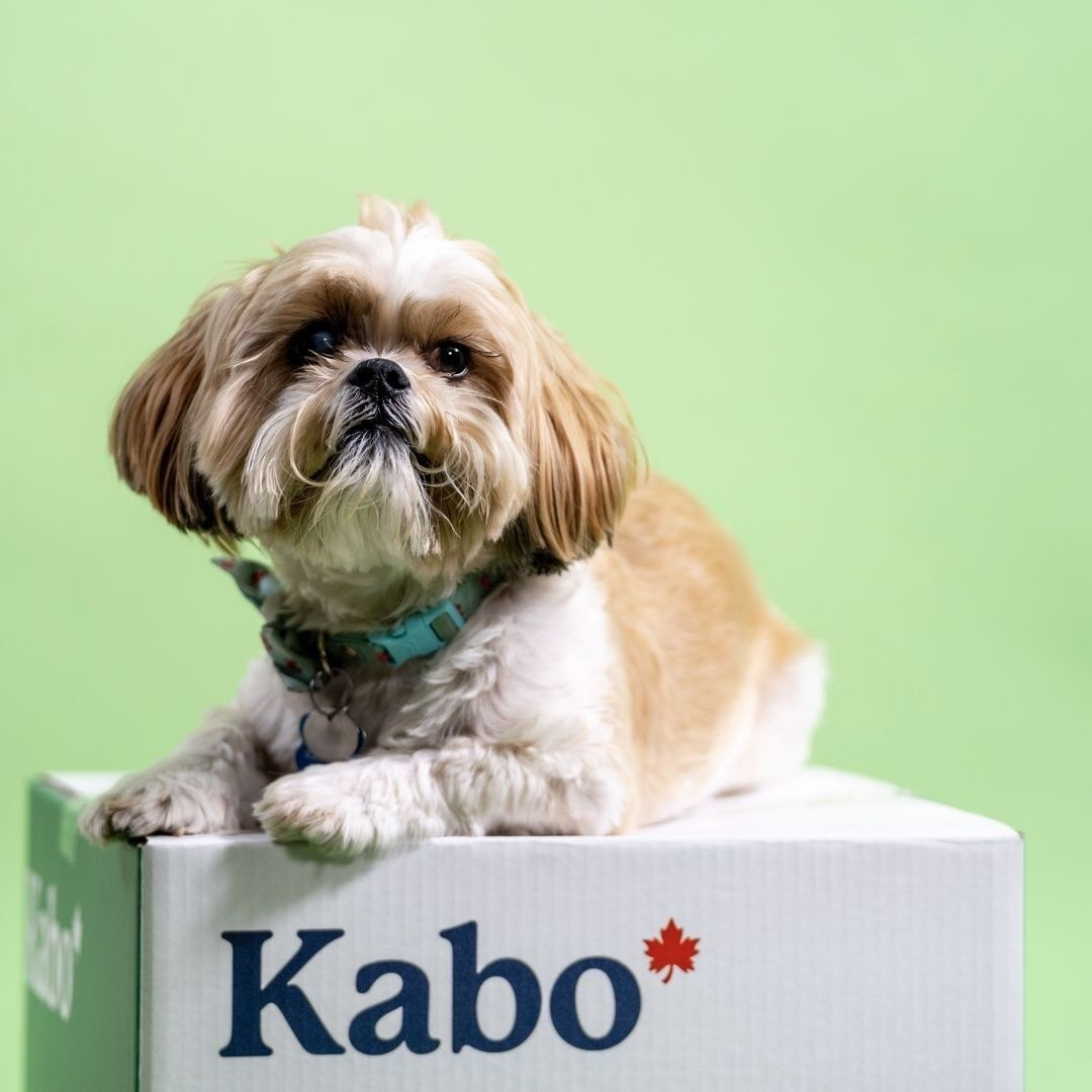 A cute dog sits on a box that says Kabo with a red maple leaf