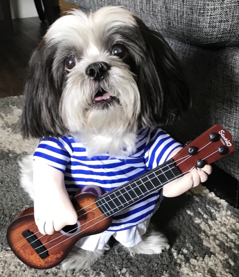 a dog wearing a costume tha tmakes it look like they having hands and are strumming a guitar