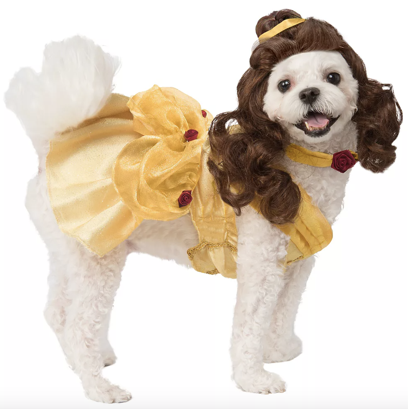 a small white dog wearing a yellow ball gown and brown wig so they look like belle from beauty and the beast