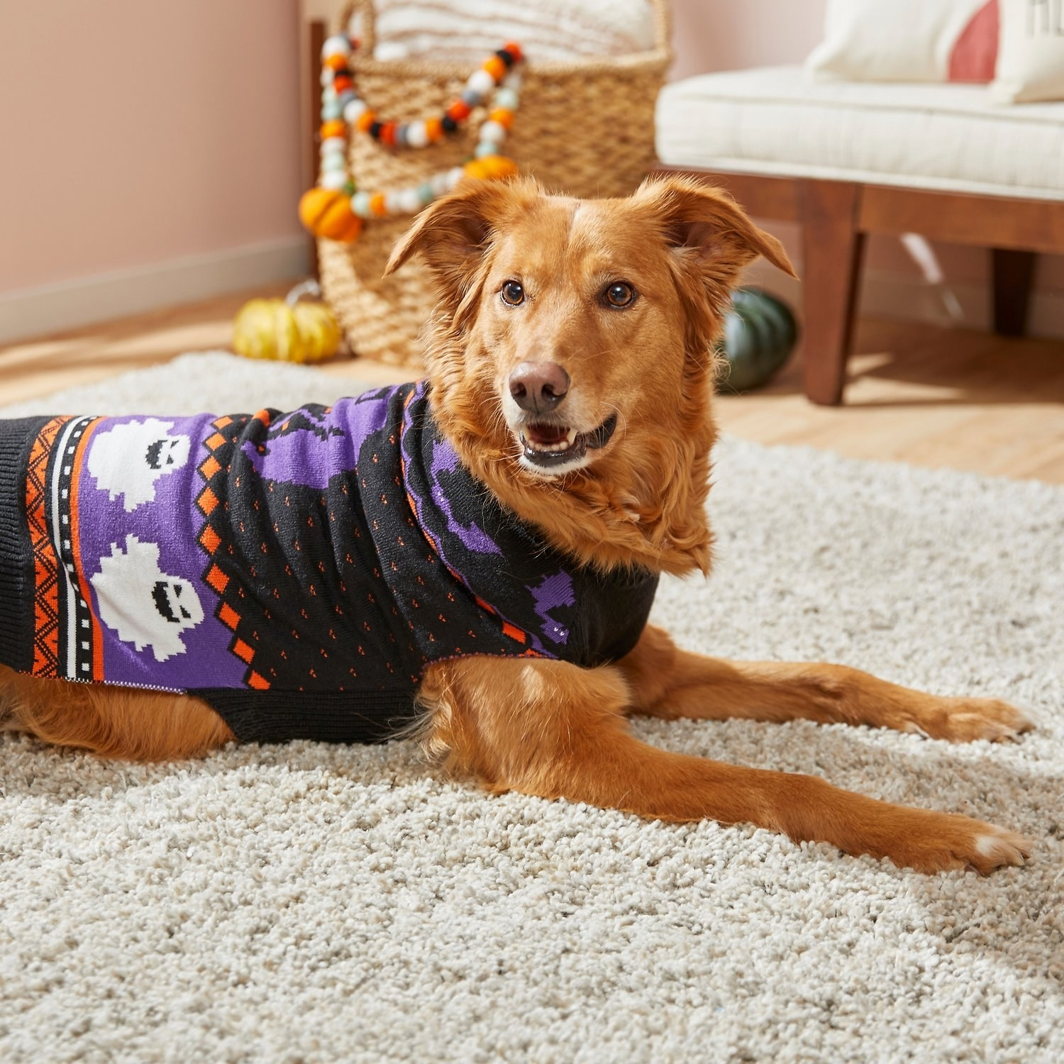 a big dog wearing a black sweater with a purple and orange design and ghosts across it