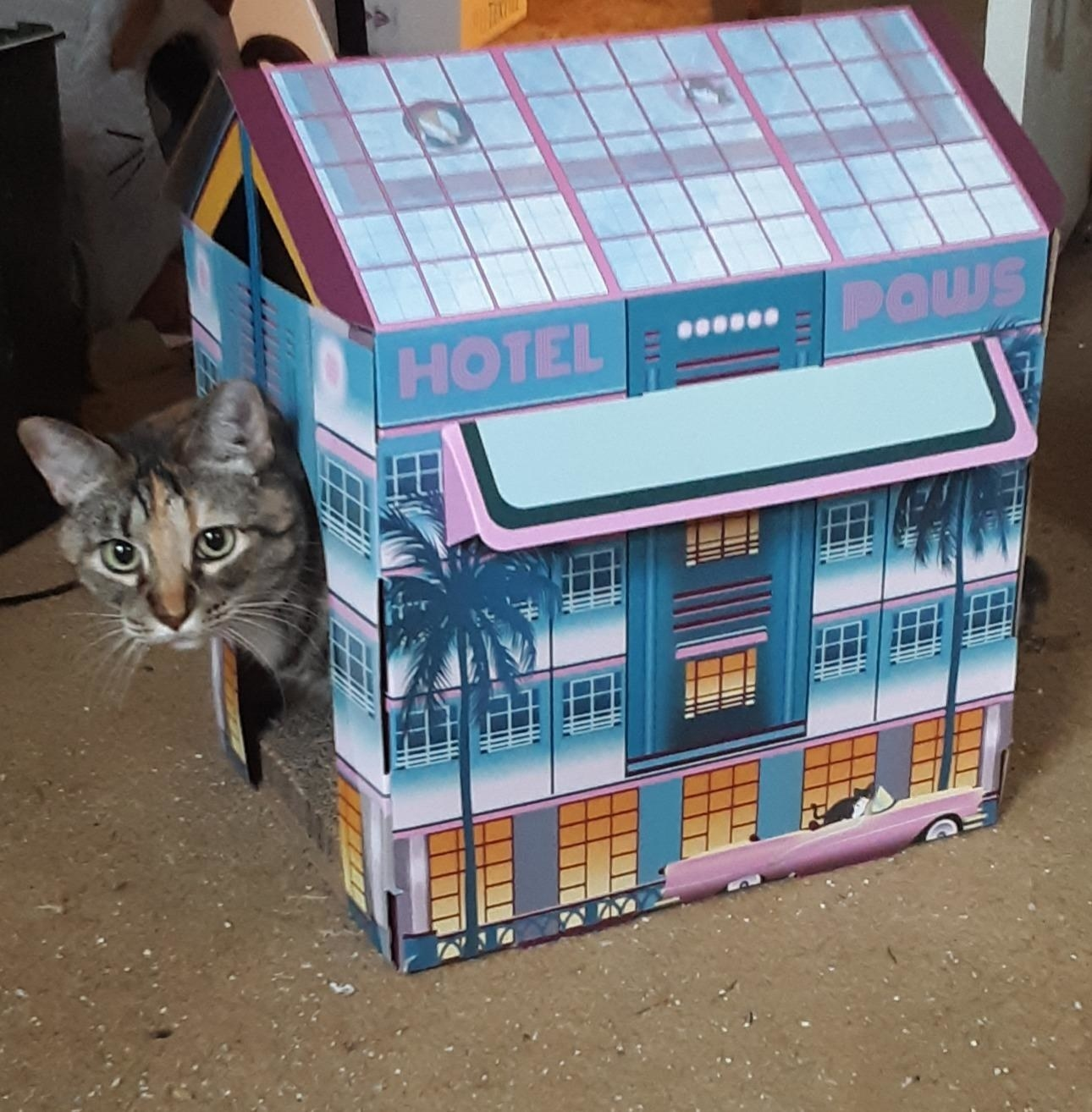 "A cat peeking out of the cardboard house that reads ""Hotel Paws"" and is decorated with palm trees, art deco windows, and a convertible driving by. It has a 3D awning and the roof is decorated to look like skylight windows"