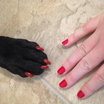A dog paw and a human hand both rocking red nail polish