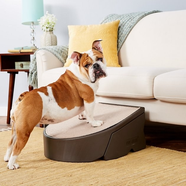 A dog steps onto the Pet Gear Easy Pet Step which is propped up against a couch