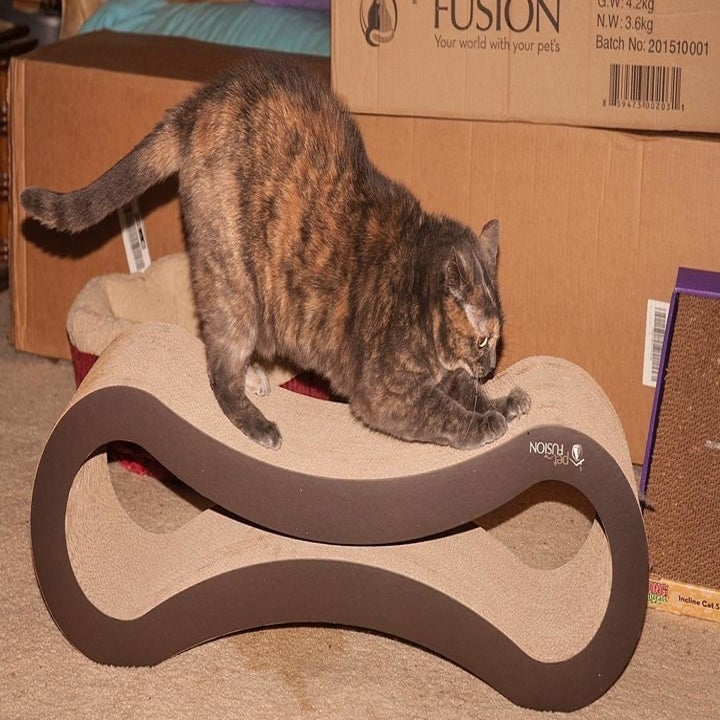 Reviewer's cat scratching the lounger