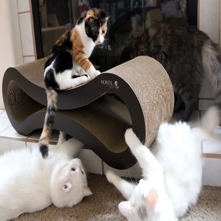 Four cats investigating the infinity-shaped cat scratcher