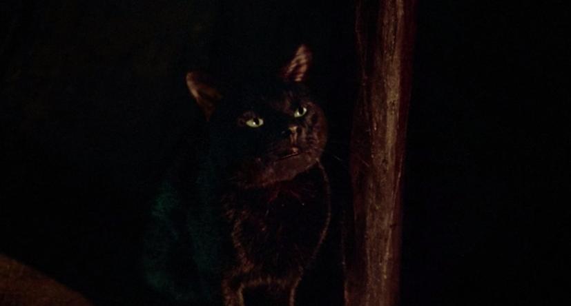 Thackery Binx turned black cat.