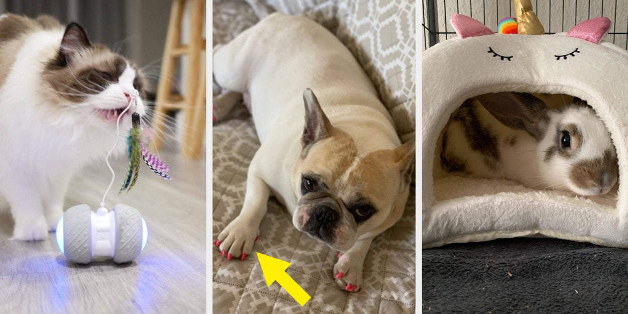 """Image of article '21 Pet Products From Amazon That May Make You Think """"Why Can't I Have That For Myself'"""