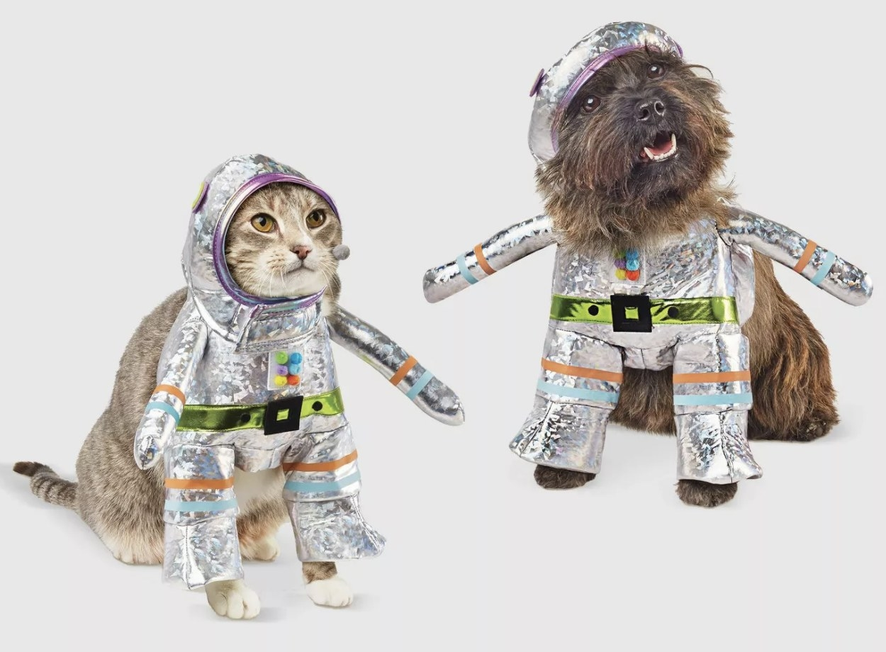 Cat and dog wear matching robot costumes
