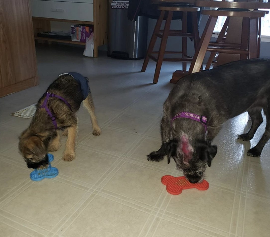 Two dogs licking peanut butter out of blue and red mats on the kitchen floor