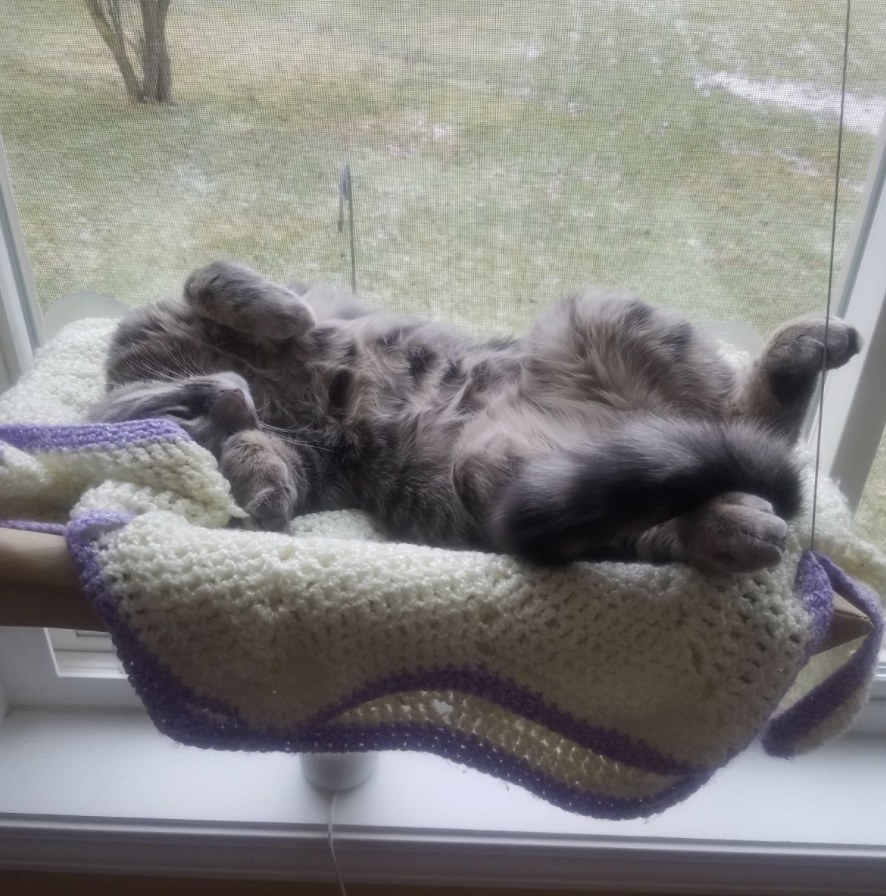 A cat sleeping belly up on a perch suctioned to the window