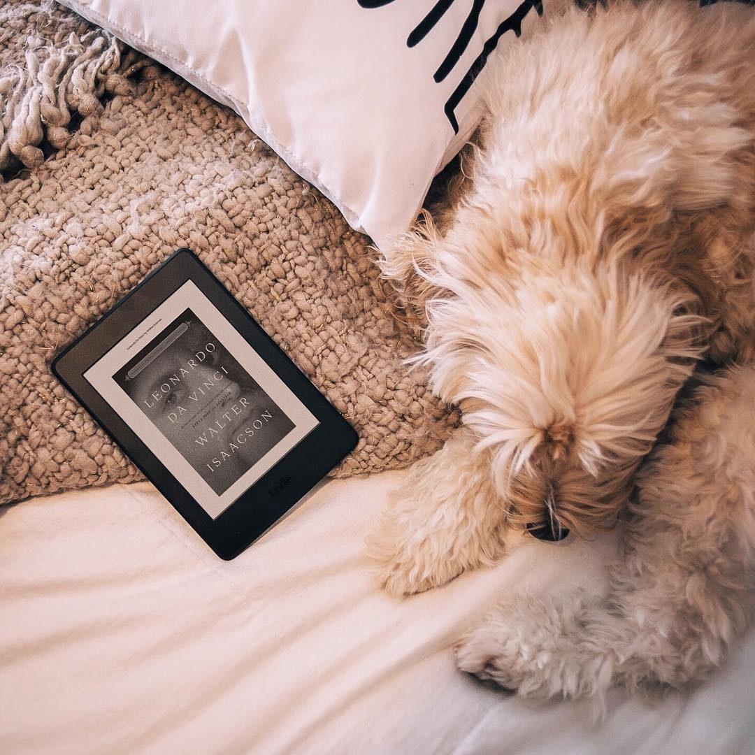 A dog next to a Kindle