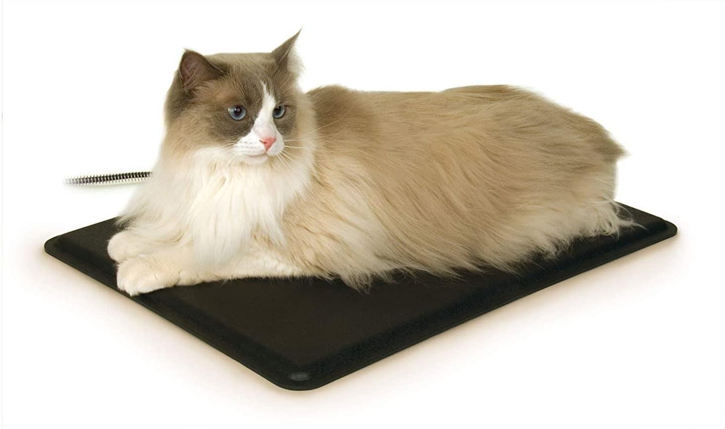 Fluffy cat on the black rectangular mat