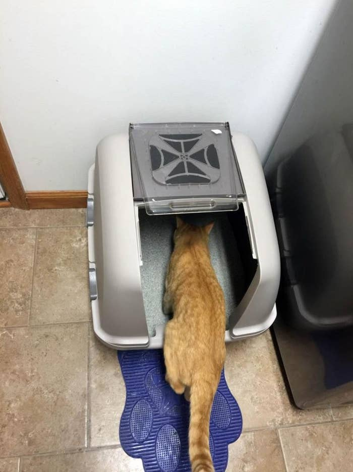 A reviewer's image of their orange cat in the warm gray litter pan