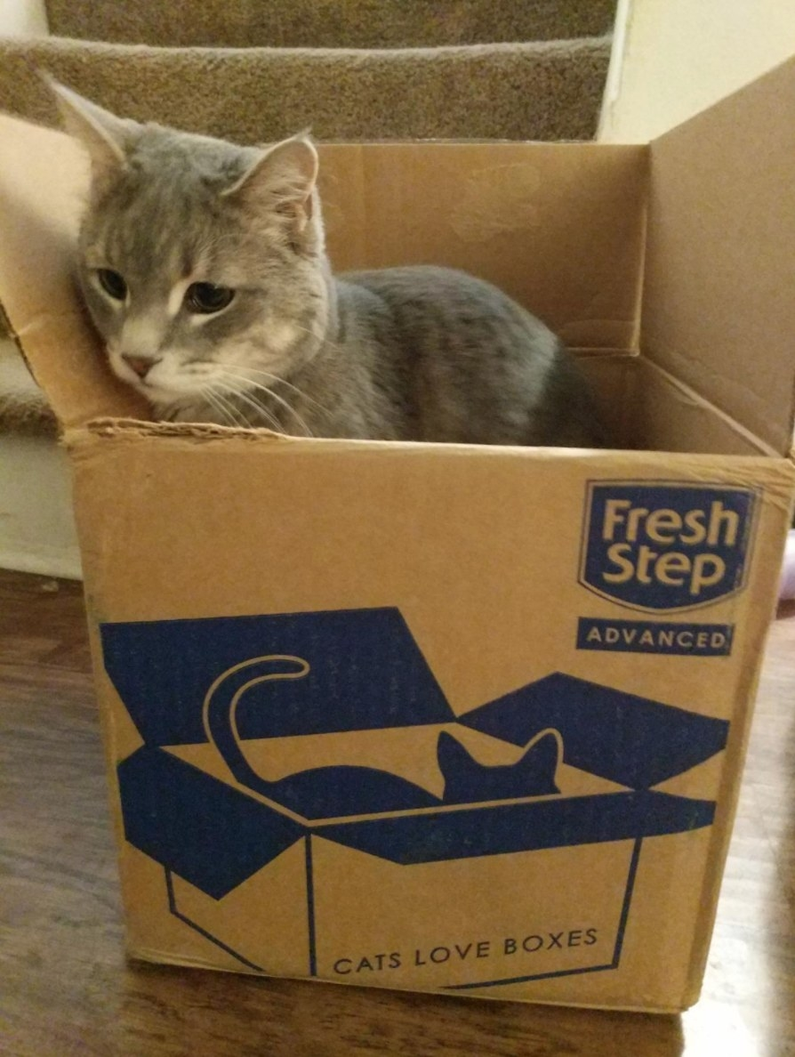 A reviewer's cat in the cardboard box the Fresh Steps litter arrived in