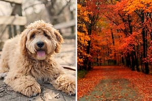 Dog and fall landscape.