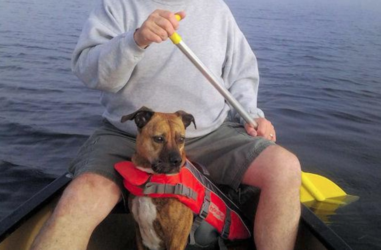 A reviewer's picture of their dog in the life vest in a kayak